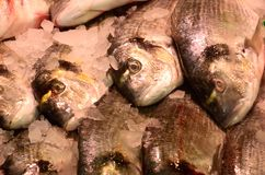 Fish on Fishmongers slab Stock Images