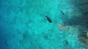 Fish float in the clear water of the Red Sea.  stock video footage