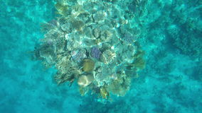 Fish floating over a coral reef. Red Sea stock video footage