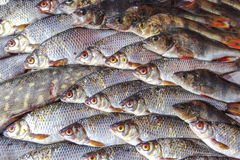Fish. A flock of live fish in the sea Stock Photo