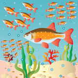 The fish flocks at a river bed. Vector    illustration Stock Photography