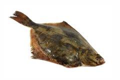 Fish flounder isolated Royalty Free Stock Image