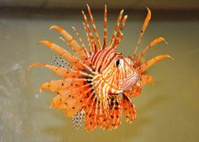 Fish-flower. Royalty Free Stock Image
