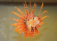 Fish-flower. Royalty Free Stock Image