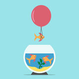 Fish flying from aquarium. Gold fish flying away from aquarium on balloon on blue background. Courage, creativity, risk, freedom, competition and success concept Royalty Free Stock Images