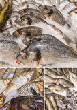 Fish food with lots of labels in the market Stock Images