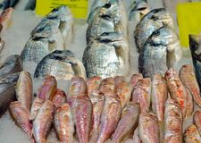 Fish Food in a Fish Market Stand. Raw Fish Food in a Fish Market Stand stock image