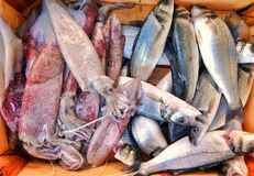 Fish Food in a Fish Market Stand. Raw Fish Food in a Fish Market Stand stock photo