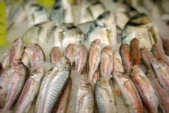 Fish Food in a Fish Market Stand. Raw Fish Food in a Fish Market Stand royalty free stock images