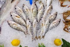 Fish Food in a Fish Market Stand. Raw Fish Food in a Fish Market Stand stock photography