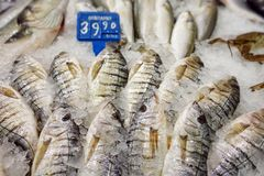 Fish Food in a Fish Market Stand. Raw Fish Food in a Fish Market Stand stock photos