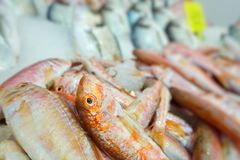 Fish Food in a Fish Market Stand. Raw Fish Food in a Fish Market Stand royalty free stock photos