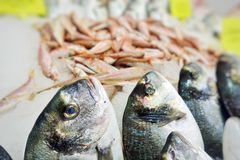Fish Food in a Fish Market Stand. Raw Fish Food in a Fish Market Stand royalty free stock photo