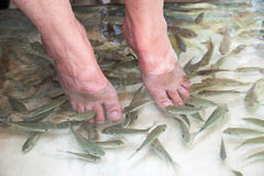 Fish foot massage Royalty Free Stock Photography