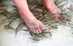 Fish foot massage Royalty Free Stock Image