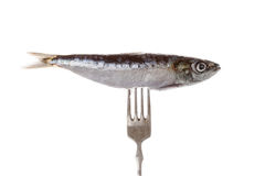 Fish on fork. Stock Photo