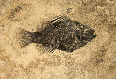 Fish fossil Stock Image