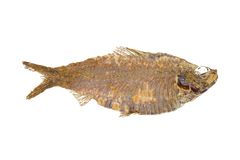 Fish Fossil Royalty Free Stock Image