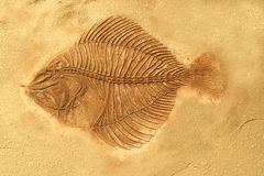 Fish fossil. On stone background Stock Photo