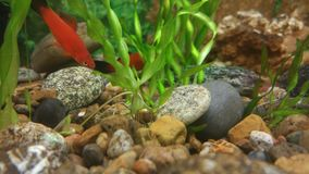 Fish and snail. The fish found a new friend Royalty Free Stock Photo