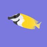 Fish fox vulpinus, siganus. Aquarius fish fox on a violet background Stock Photos