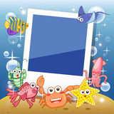 Fish frame. Decorative frame for photo with tropical bright fishes Stock Photo