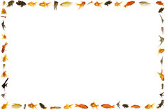 Fish frame isolated on white background Royalty Free Stock Photos