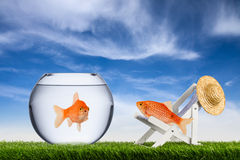 Fish freedom concept Royalty Free Stock Images