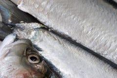 fish fresh 免版税库存图片
