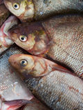 Fish  fresh Royalty Free Stock Image