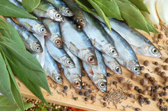 Fish with fresh bay leaves Royalty Free Stock Photos