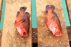 Fish fresh in cape verde Stock Photos