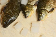Fish, fresh chilled with ice. Stock Photo