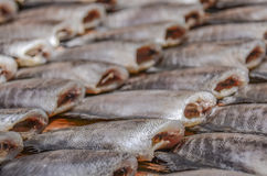 Fish. Fresh  fish - food and drink Royalty Free Stock Photography
