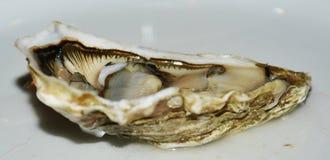 Fish. Fresh fresh oyster. Background. Stock Photography