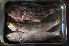 Fish fresh royalty free stock photos
