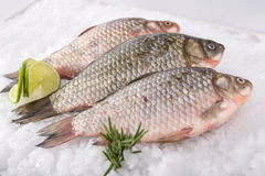 Fish fresh. Fresh fish ice frozen royalty free stock image