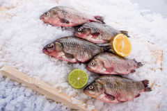 Fish fresh Stock Photography
