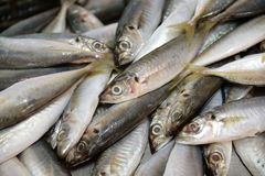 Fish fresh Royalty Free Stock Photography