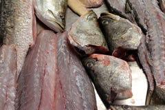 Fish fresh Royalty Free Stock Images