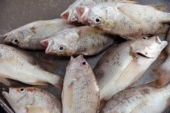 Fish fresh Royalty Free Stock Photo