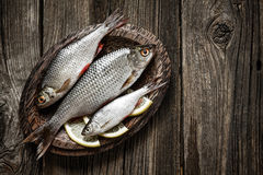 Fish Royalty Free Stock Image