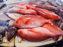 Fish. Fresh fish at the fish market Royalty Free Stock Photo