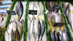 Fish. Fresh fish in the market Royalty Free Stock Photos