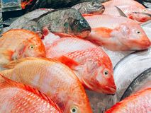 Fish fresh in the supermarket royalty free stock photos