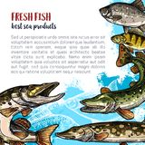 Fish animal sketch poster template design. Fish fresh product poster template. Sea and river fish animal sketch banner of ocean perch, trout, pike, carp, crucian Royalty Free Stock Images