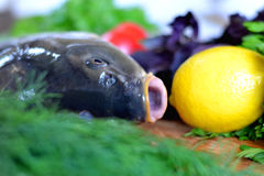 Fish with fresh vegetables and herbs. The fresh fish carp on a wooden background with vegetables and herbs Stock Image