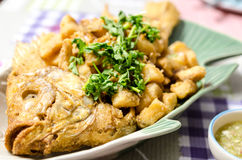 Fish fried sprinkled with coriander Royalty Free Stock Photo