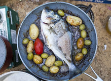 Fish gilt-head bream on the pan. Fish gilt-head (sea) bream (Sparus aurata) on the pan royalty free stock images