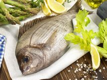 Fish - Gilthead Seabream. On wooden Background stock images